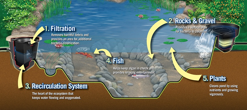 Ecosystem-Pond Components-Soares Landscaping-Water-Features